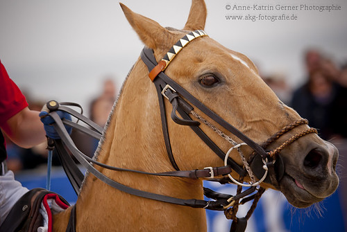Beach Polo Sylt 7-6