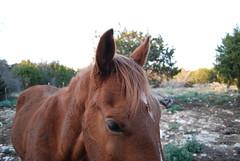 (Alexa Night) Tags: horses austin texas country cash hillcountry 2010 winter2010 february2010