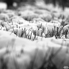 part I (natalia.chomac) Tags: winter snow makro helios