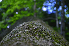 Like a rock...and trees...and sky. (Brian K. Brown) Tags: blue trees green nature rock moss bokeh