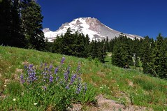 Peaceful view (Just Peachy!) Tags: oregon mthood mthoodnationalforest