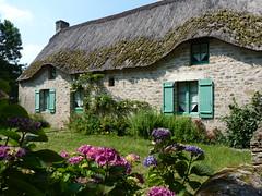 Kerhinet (PatMargat) Tags: france maison campagne parc hortensia naturel chaume chaumière loireatlantique régional toitdechaume lagrandebrière pnrgrandebrière