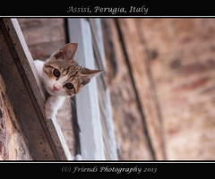 Peekaboo, who is there ? (drbob97) Tags: light summer vacation italy orange pet white holiday window animal cat is italian kat warm who peekaboo there perugia assisi italie umbria drbob umbrie spoletto 2013 friendsphotography mygearandme drbob97