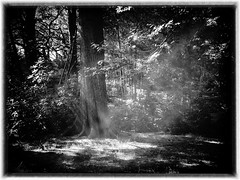wood blackandwhite sunlight tree nature leaves forest... (Photo: Graham'M on Flickr)