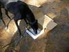 GreyhoundPlanetDay2010013