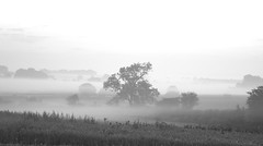 Washed-out Morning on the Hill (immygrace) Tags: morning autumn england 6 white mist black tree fall nature monochrome field sunrise out landscape dawn countryside early back am moody hill panoramic follow pale washed followback immygrace