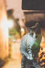 _DSC0393 (Carlos Fachini ™) Tags: animals cat 50mm nikon gato felinos animales nikond7000