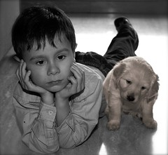 IMG_2302 (Pedro Montesinos Nieto) Tags: dog nios perro cachorros fragile mascotas tenderness ageofinnocence miradas ternura inseparables laedaddelainocencia fielamigo frgiles