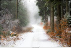Sauerland (bernd obervossbeck) Tags: winter snow nature forest landscape soft track path natur landschaft wald weg sauerland weich hochsauerland jagdhaus bestcapturesaoi elitegalleryaoi mygearandme mygearandmepremium