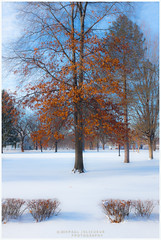 Winter at the Park? (Paul Jolicoeur Photography) Tags: rockpaper