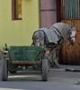 working horse resting (ochils) Tags: outstandingforeignphotographersvisitingromania