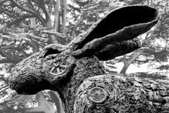 hare (Harry Halibut) Tags: park trees bw sculpture west blancoynegro grass branco bronze blackwhite hare noiretblanc yorkshire sophie preto ryder zwart wit crawling weiss bianco blanc nero allrightsreserved barnsley bretton yorkshiresculpturepark noire schwatz contrastbysoftwarelaziness 2011andrewpettigrew ysp110719328a