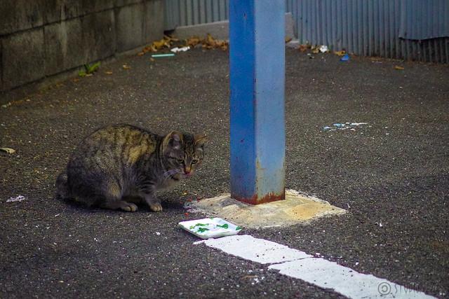 Today's Cat@2014-01-28