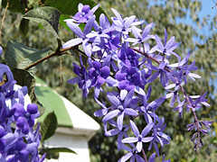 Blue Perfection! (kim_reubins) Tags: travel flowers nature gardens spain holidays parks espana costadelsol andalusia benalmadena yabbadabbadoo