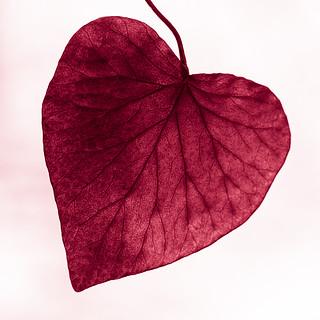Macro Mondays : Heart