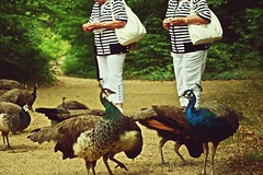 Twin Souls? (catarinae) Tags: twin souls unesco world heritage peacock island berlin deutschland germany animals feed two old older women black white stripes