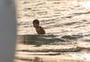 Kid (mlahsah) Tags: sea kids ksa kid nikon nikond750 ngc sabya sa beach sunset gold redsea baish السعودية صبيا بحر أطفال طفل غروب ذهب موج لعب سباحة