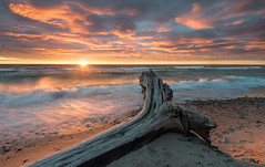 Fallen (Uldis K) Tags: drift wood seascape sea shore sunset balticsea liepaja latvia europa