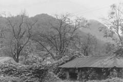 Pentax Film (wrpugsley) Tags: bw kentmere100 pentax southkorea blackandwhite