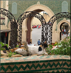 her secret garden (mhobl) Tags: babboujeloud cat katze medina fes maroc green tiles pattern