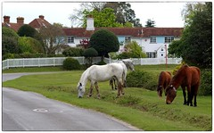 A postcard from the New Forest Wild Horses (Simon's utak) Tags: horses wildhorses newforest eastboldre hampshire