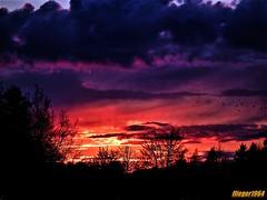 Sonnenuntergang im Frühling / Sunset in the spring (flieger1964) Tags: frühling farben deutschland germany vogtland sachsen sonne sonnenuntergang sunset europa spring