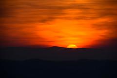 Sunset Rhône-Alpes (MARTIN FRED) Tags: rhônealpesauvergne nature d800 d5100 samyang1428 sigma150600sport lens sun flore faune chevreuil brocard light lumièrenaturelle bois foret cervidé soleillevant rayondesoleil goldenhoursunset sunset