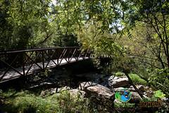 2016, Arkona, conservation area, Fall, Rock Glen-3211