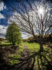 Trees sun and trees. (CWhatPhotos) Tags: sun light trees tree sky clouds moor fell bush sunlight rays photographs selfie have it photograph pics pictures pic picture image images foto fotos photography artistic that which contain digital cwhatphotos waldridge north east england uk wood woods countryside nature views view olympus four thirds camera