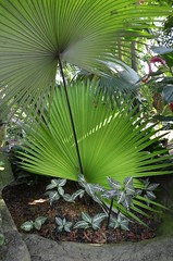 The Tropics In Milwaukee (Laurette Victoria) Tags: domes milwaukee mitchellpark h th