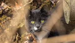 7K8A6795 (rpealit) Tags: scenery wildlife nature east hatchery alumni field hackettstown cat