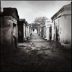 Lafayette cemetery (e l e c t r o l i t e) Tags: hasselblad tmax400 neworleans 60mm electrolite shannonrichardson