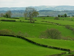 Beautiful Welsh Countryside.... (Marie on Flickr) Tags: mid wales countryside green sheep peaceful trees hills grass