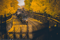 Photo Bomb (benpsut) Tags: alleghenycommonspark ns ns9262 nsconemaughline norfolksouthern westpark autumn cool leaves lol railroad raining trains trench whateven yellow yellowbrickroad