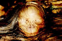 Mother Nature - Post Mortem (gripspix (OFF)) Tags: 20170330 sadness trauer zerstörung destruction wood holz decay vergammelt death skull schädel processed bearbeitung umwelt ecology