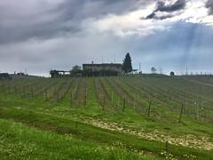 La casa nel vigneto  - The House in the vineyard (trovado73) Tags: skyandclouds sky cypresstrees hill green chianti vineyard