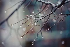 (ems_keogh) Tags: bokeh tree branch rainbow wet rain drop drip droplets photo art photography outdoors outside