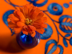 Orange and Blue Complement Each Other -Explored April 2, 2017 (Anne Worner) Tags: anneworner em5 orangeandblue blossom blue closeup flower olympus orange plant zinnia complementary complementarycolor compactzinnia macromondays vase painted folkartbrushstrokes explore