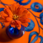 Orange and Blue Complement Each Other -Explored April 2, 2017 thumbnail
