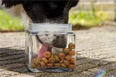 16/52 ... the coockie jar ... (neurosheep) Tags: 52weeksfordogs omdweek162017 challenge4 drift bordercollie