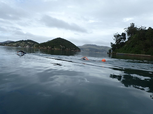 Otago Harbour Swim 2017