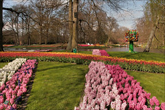 Keukenhof (TeunisHaveman) Tags: keukenhof holland bloemen flowers park bollen tulpen hiacinth garden bulp hyacinth tulp