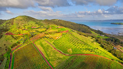 Over+The+Wine+Fields+Of+Waiheke+Island