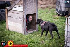 2017_04_22_ Qna _OSP Kęty Dzień psa ratowniczego_0154