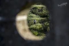 Waiting/Á Espera! (P.J.V Martins Photography) Tags: peeking waiting baja rally rali nature natureza terrain allterrain tt outdoors landscape portugal