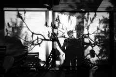 Shadows on the wall (No_Mosquito) Tags: night dark light monochrome tree spring canon powershot g7x mark ii moonlight shadow wall window chairs long exposure blinds
