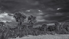 Evening clouds (Tim Ravenscroft) Tags: clouds beach caspersen palm trees florida monochrome blackwhite
