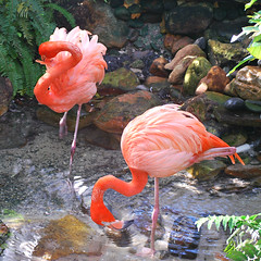 Key West (Florida) Trip 2016 0213Ri sq (edgarandron - Busy!) Tags: florida keys floridakeys keywest butterflyhouse keywestbutterflyandnatureconservatory bird birds flamingo