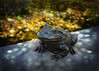 Feelin Froggy (Daveyal_photostream) Tags: nikon nikor nature meandmygear mygearandme mycamerabag statue bokeh smartphotoeditor frog d600 photoshop lightroom smartphotoediter