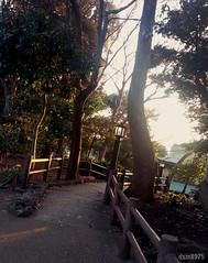 Shining (dxm8975) Tags: scenery view light nature вид пейзаж красота